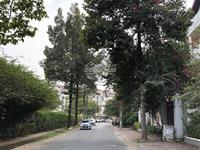 Cần bán nhà nam long trần trọng cung, quận 7 giá rẻ nhất 20 tỷ, gọi 093 1155 *** để tư vấn 24/7
