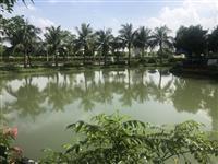 Bán nhanh lô hoa phượng 270m2, 35tỷ, sông thoáng, để lại theo hiện, vinhomes riverside 093.25.33***